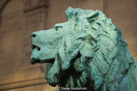 Lion of Art Institute Chicago